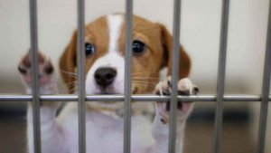 Best Charities Local Animal Shelter